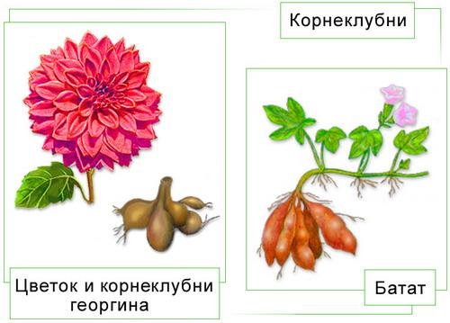 """"""",""""biologymoscow.ucoz.ru"""