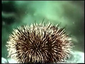 Многоклеточные животные тип